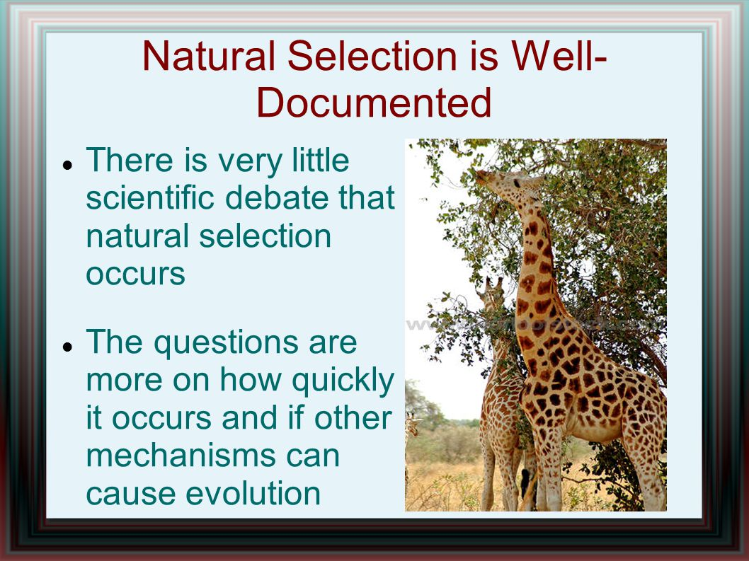 Natural Selection is Well- Documented There is very little scientific debate that natural selection occurs The questions are more on how quickly it oc