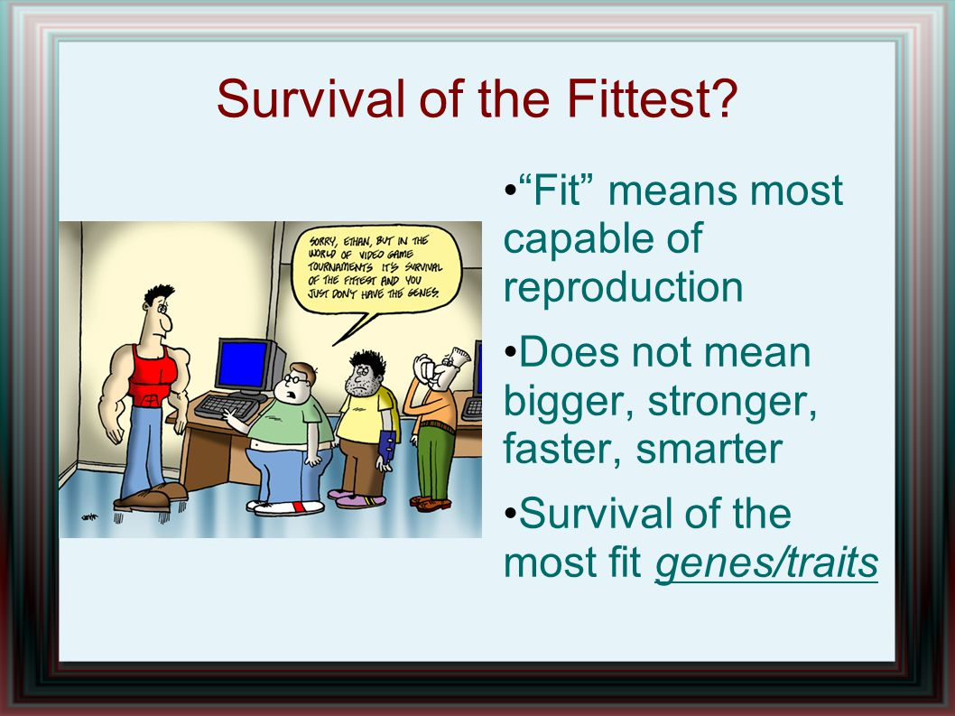 "Survival of the Fittest? ""Fit"" means most capable of reproduction Does not mean bigger, stronger, faster, smarter Survival of the most fit genes/trait"