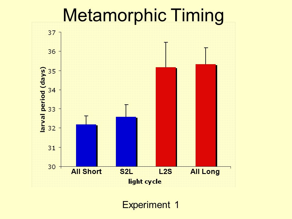 Metamorphic Timing All ShortS2LL2SAll Long Experiment 1