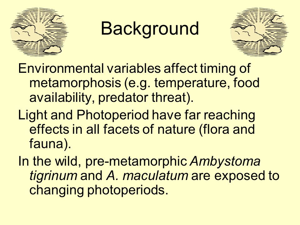 Background Environmental variables affect timing of metamorphosis (e.g.