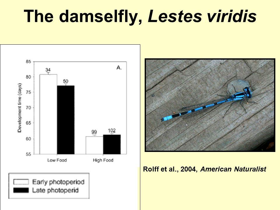 The damselfly, Lestes viridis Rolff et al., 2004, American Naturalist