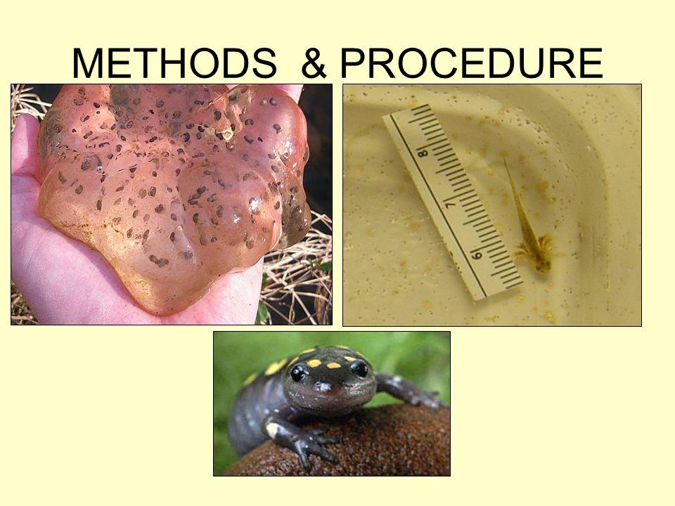 METHODS & PROCEDURE
