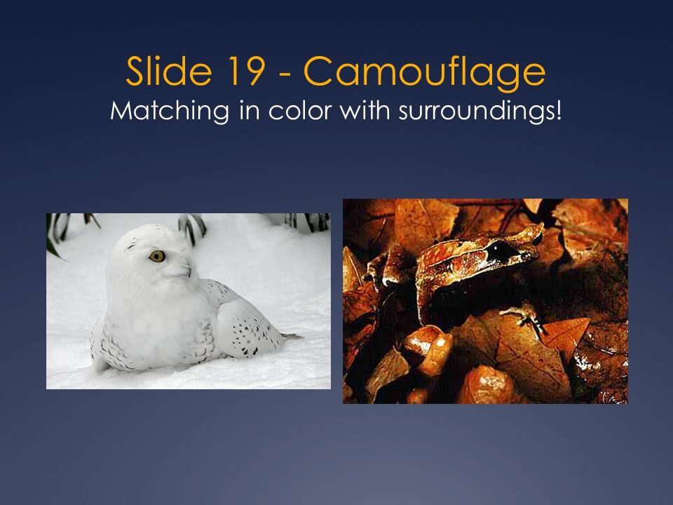 Slide 19 - Camouflage Matching in color with surroundings!