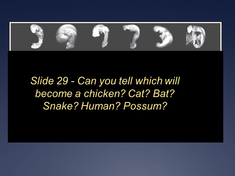 Slide 29 - Can you tell which will become a chicken Cat Bat Snake Human Possum