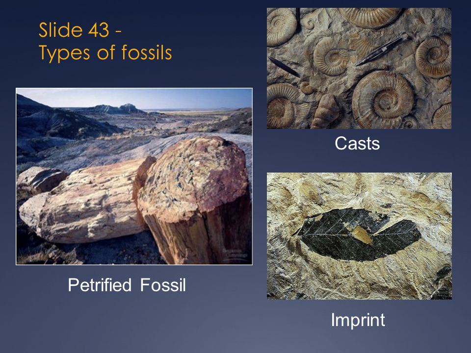 Slide 43 - Types of fossils Petrified Fossil Casts Imprint