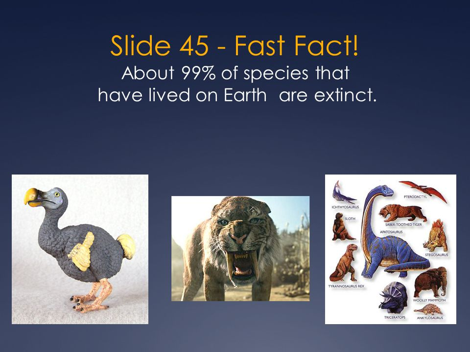 Slide 45 - Fast Fact! About 99% of species that have lived on Earth are extinct.