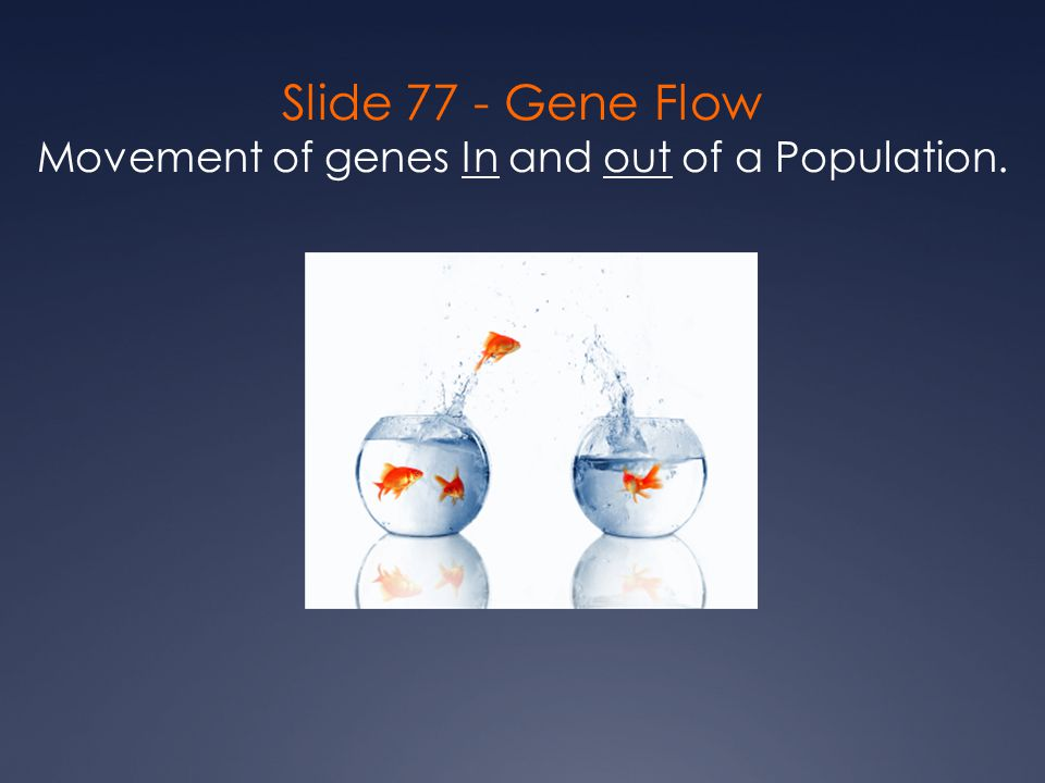 Slide 77 - Gene Flow Movement of genes In and out of a Population.