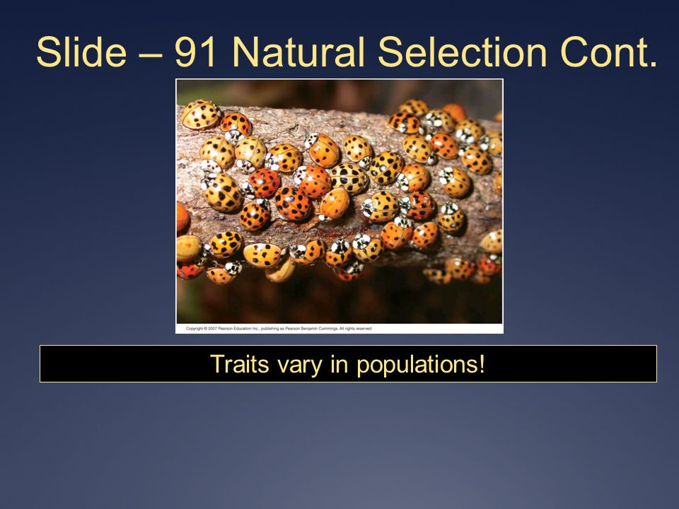 Slide – 91 Natural Selection Cont. Traits vary in populations!