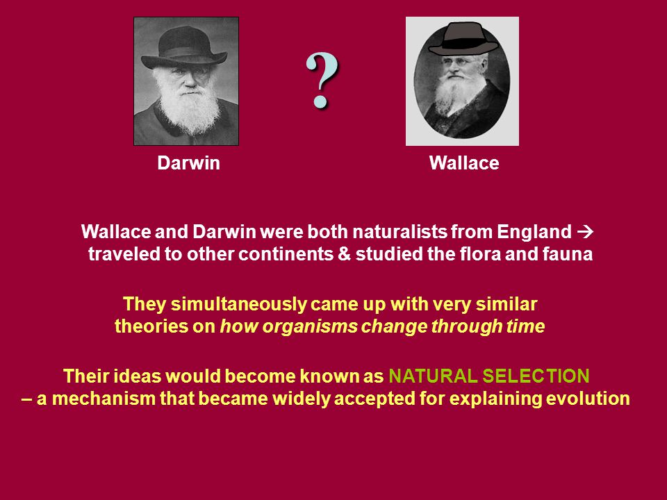 Wallace and Darwin were both naturalists from England  traveled to other continents & studied the flora and fauna DarwinWallace Their ideas would become known as NATURAL SELECTION – a mechanism that became widely accepted for explaining evolution They simultaneously came up with very similar theories on how organisms change through time