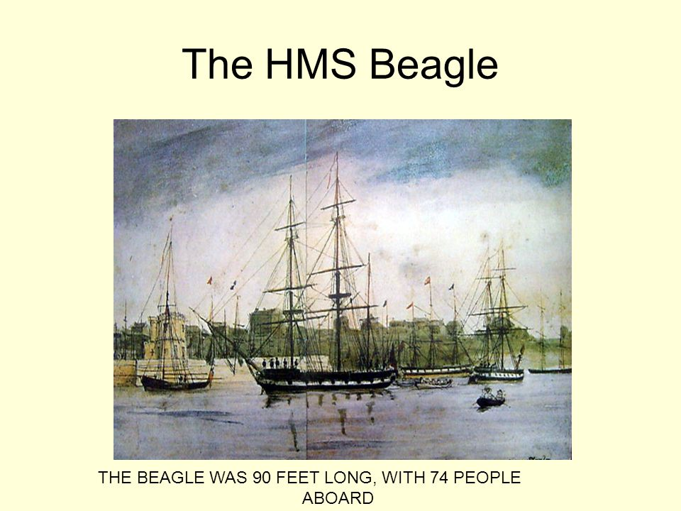 The HMS Beagle THE BEAGLE WAS 90 FEET LONG, WITH 74 PEOPLE ABOARD