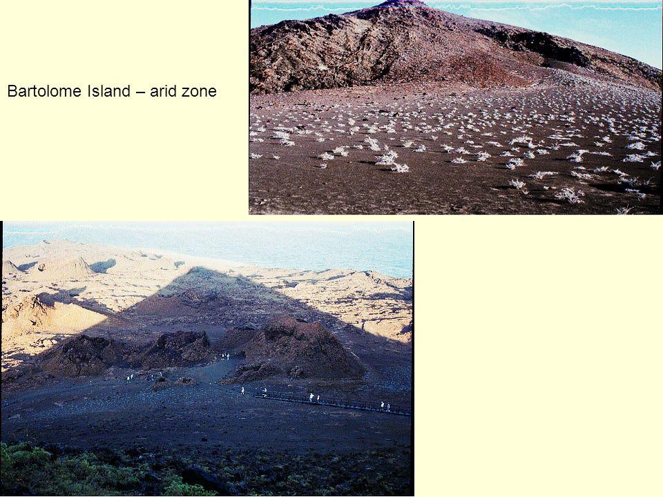 Bartolome Island – arid zone