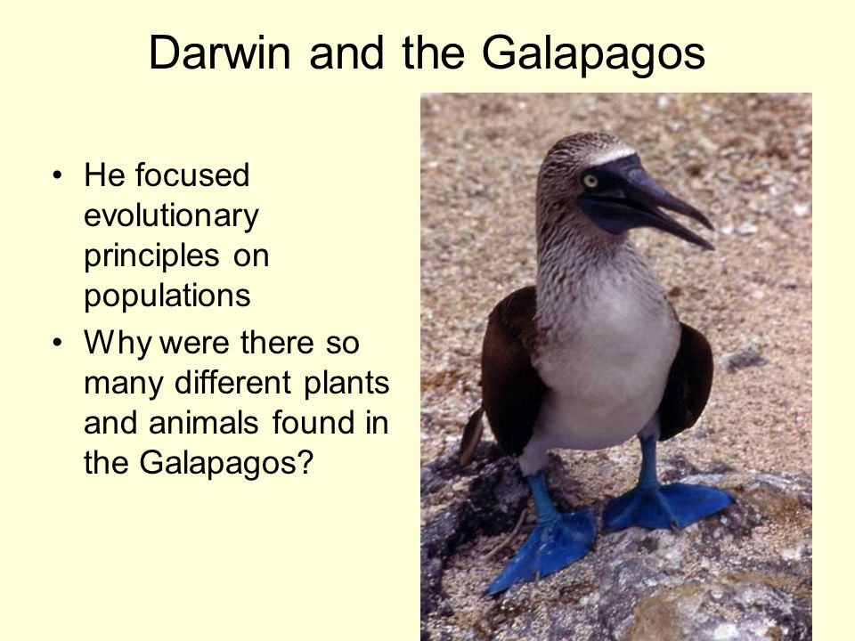 Darwin and the Galapagos He focused evolutionary principles on populations Why were there so many different plants and animals found in the Galapagos?