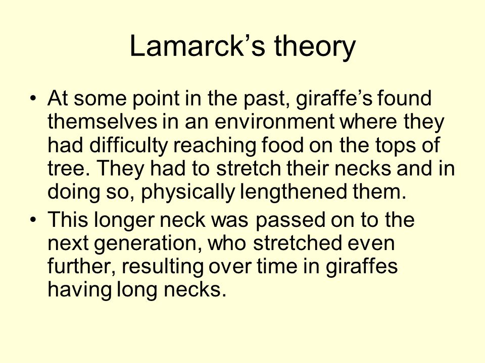 Lamarck's theory At some point in the past, giraffe's found themselves in an environment where they had difficulty reaching food on the tops of tree.