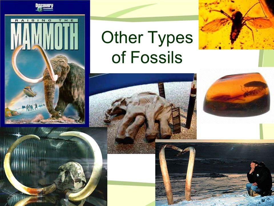 Other Types of Fossils