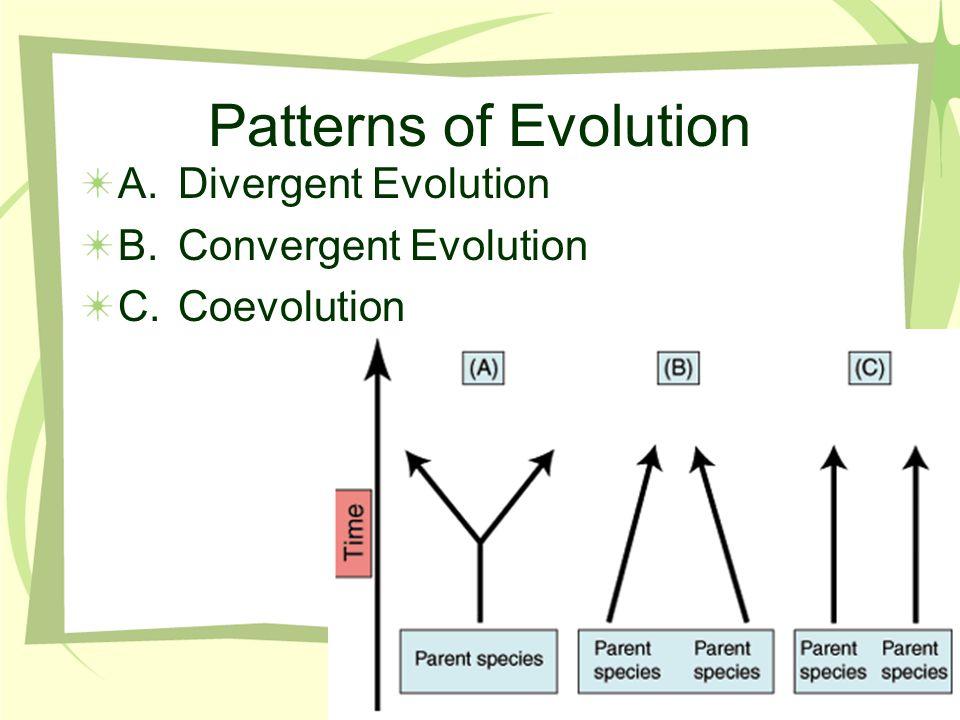 A.Divergent Evolution B.Convergent Evolution C.Coevolution