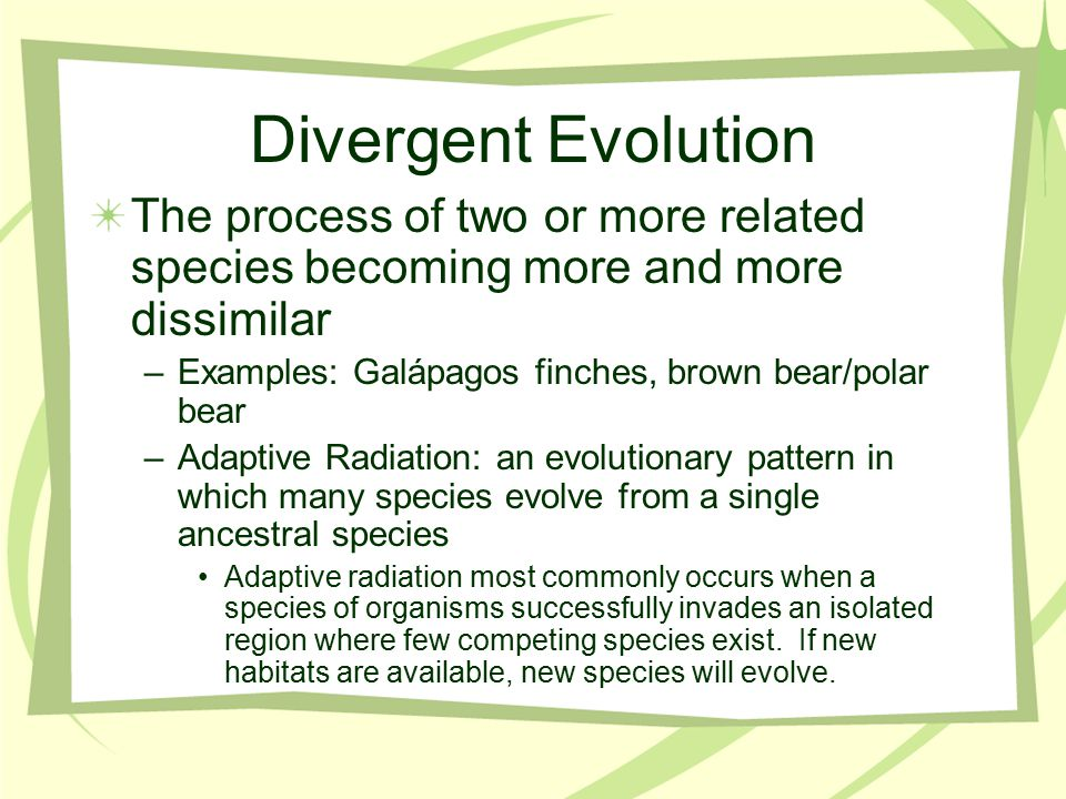 Divergent Evolution The process of two or more related species becoming more and more dissimilar –Examples: Galápagos finches, brown bear/polar bear –Adaptive Radiation: an evolutionary pattern in which many species evolve from a single ancestral species Adaptive radiation most commonly occurs when a species of organisms successfully invades an isolated region where few competing species exist.
