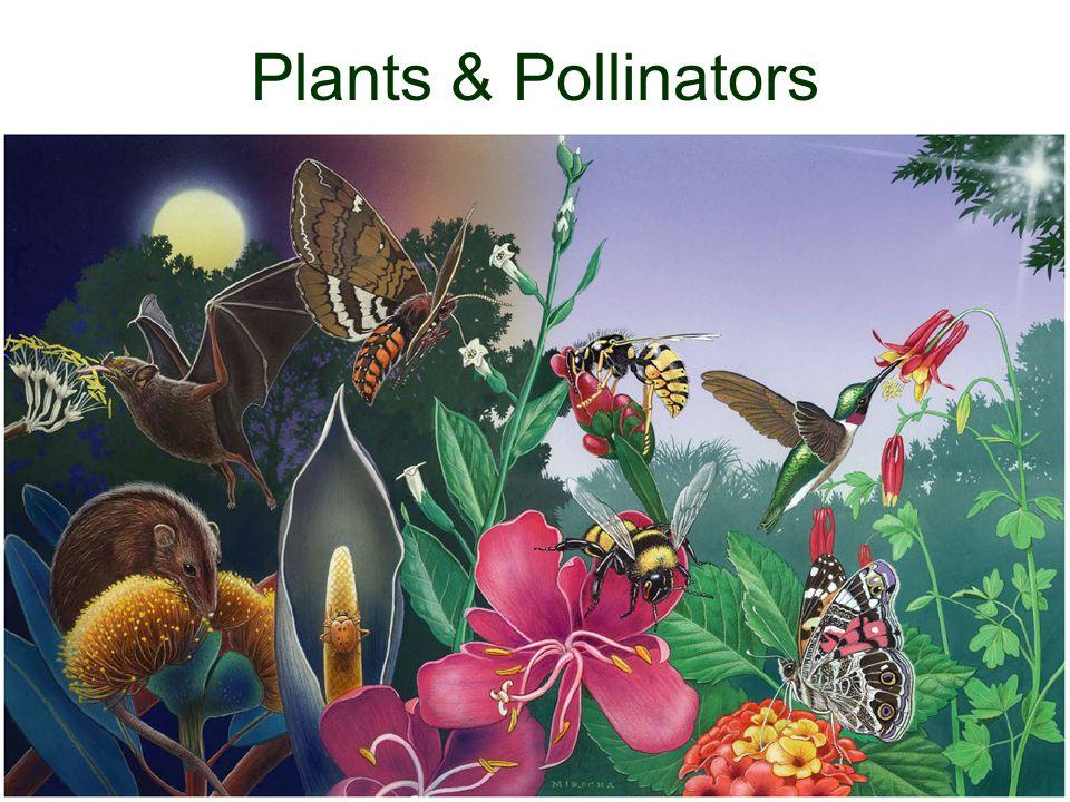 Plants & Pollinators
