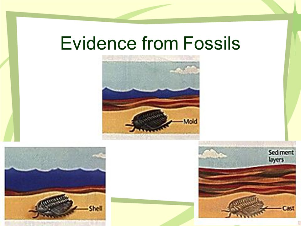 Evidence from Fossils