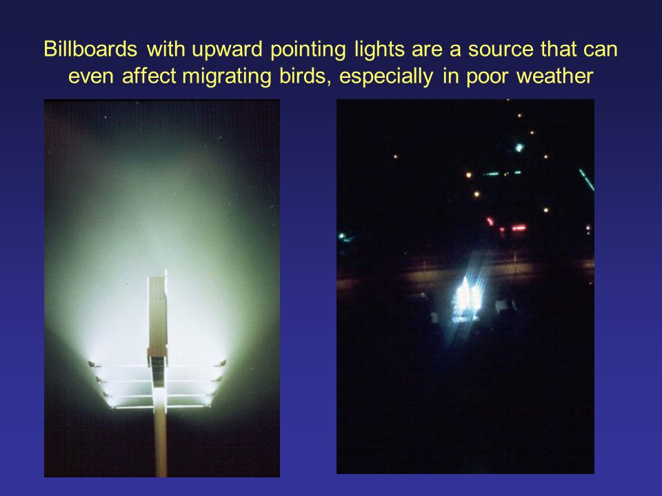 Billboards with upward pointing lights are a source that can even affect migrating birds, especially in poor weather