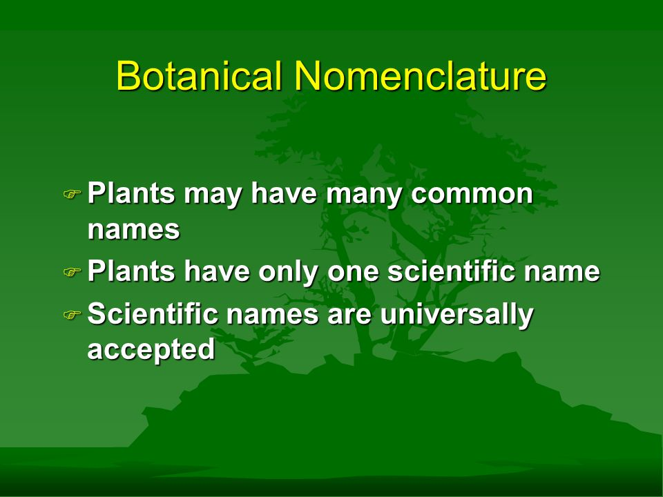 Botanical Nomenclature F Plants may have many common names F Plants have only one scientific name F Scientific names are universally accepted