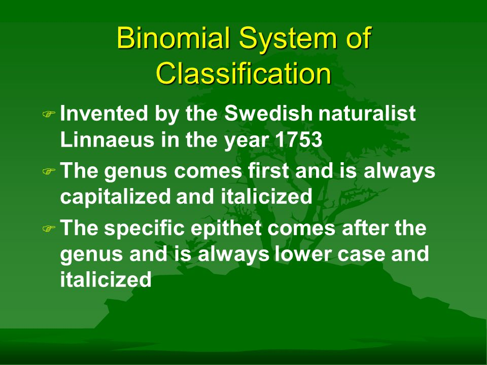 Binomial System of Classification F F Invented by the Swedish naturalist Linnaeus in the year 1753 F F The genus comes first and is always capitalized and italicized F F The specific epithet comes after the genus and is always lower case and italicized