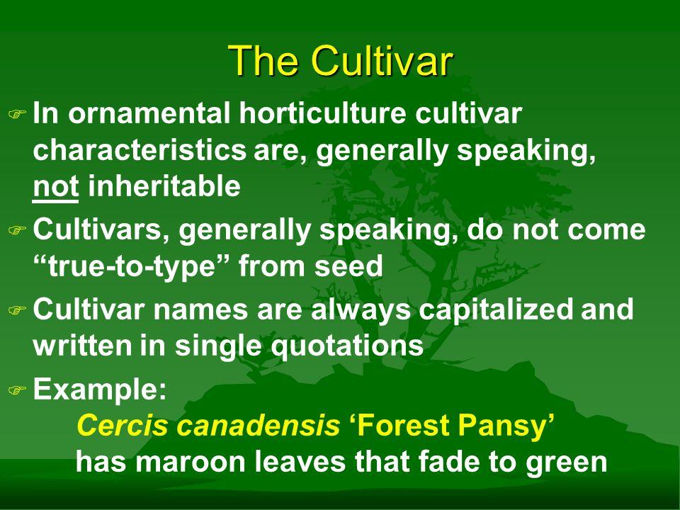The Cultivar F F A single species may have many cultivars Juniperus horizontalis 'Blue Chip' Juniperus horizontalis 'Plumosa' Juniperus horizontalis 'Hughes' etc.