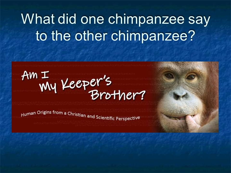 What did one chimpanzee say to the other chimpanzee?