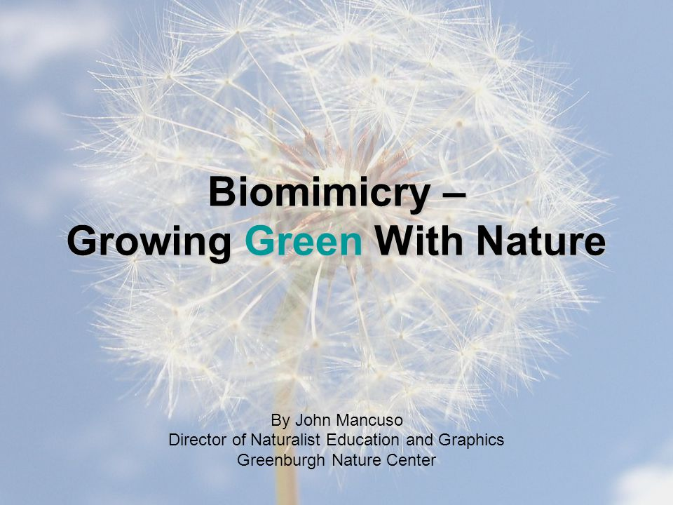 Biomimicry – Growing Green With Nature By John Mancuso Director of Naturalist Education and Graphics Greenburgh Nature Center