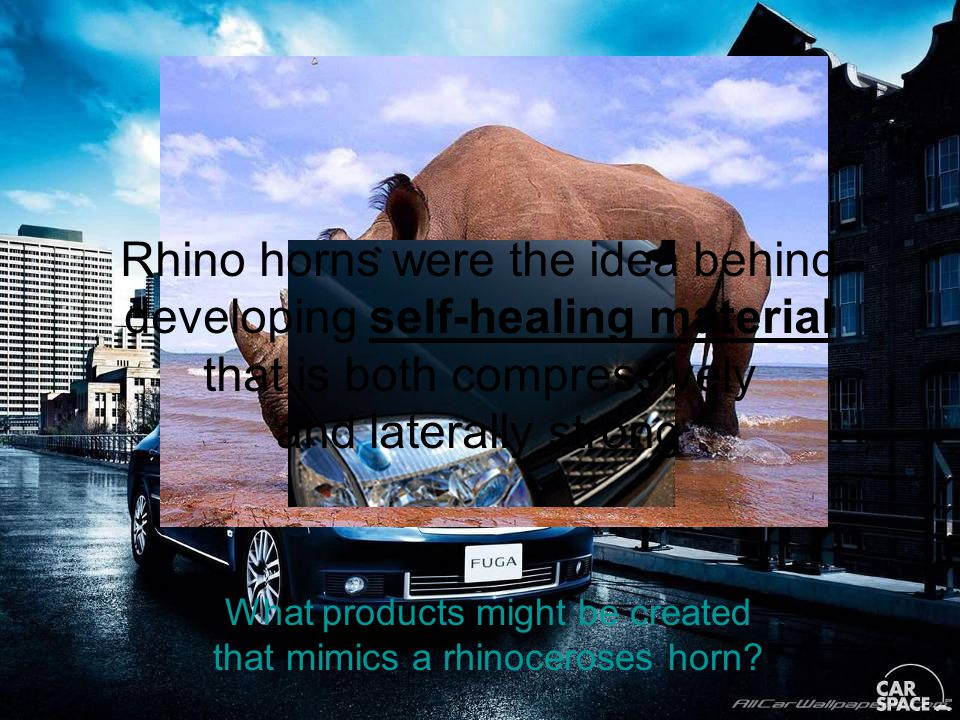 What products might be created that mimics a rhinoceroses horn.