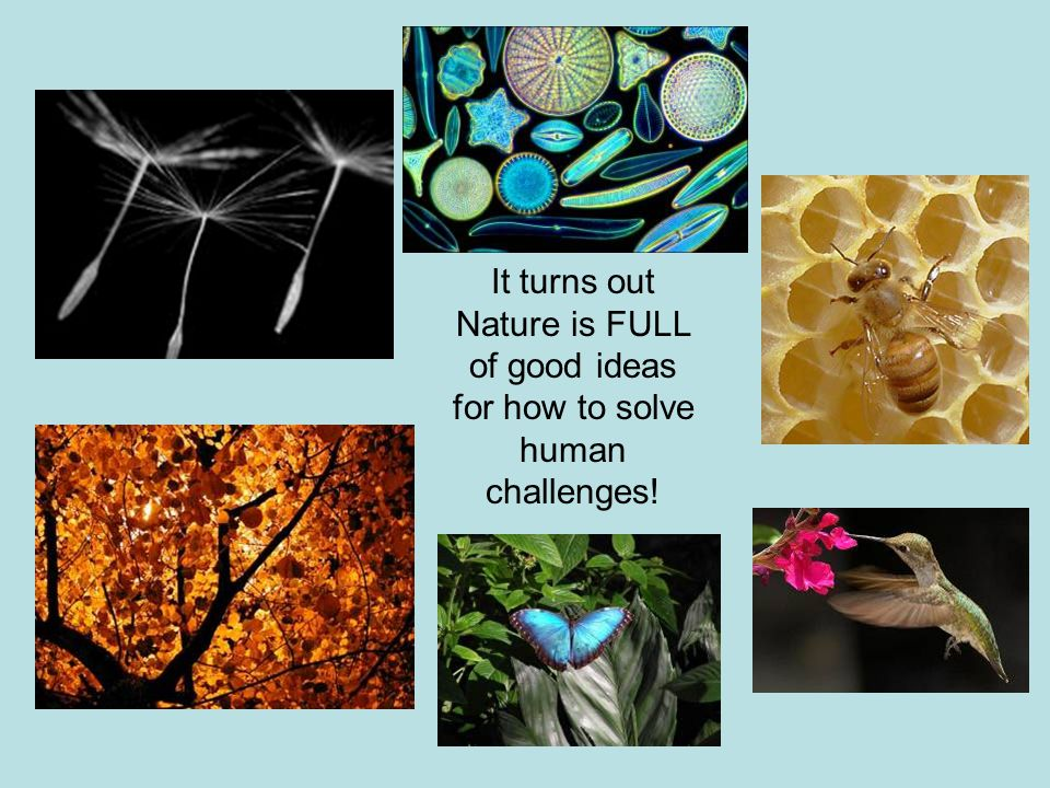 It turns out Nature is FULL of good ideas for how to solve human challenges!