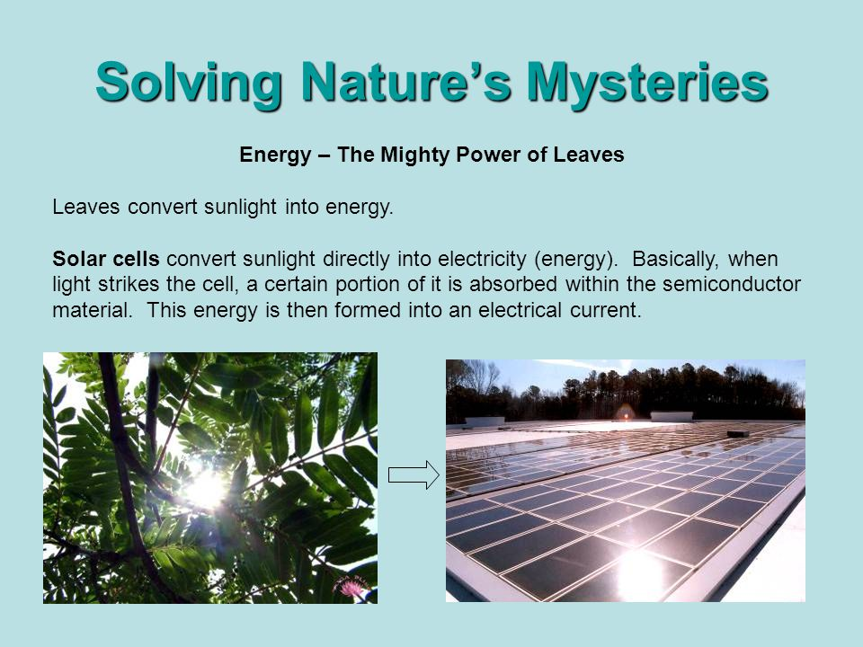 Solving Nature's Mysteries Energy – The Mighty Power of Leaves Leaves convert sunlight into energy.