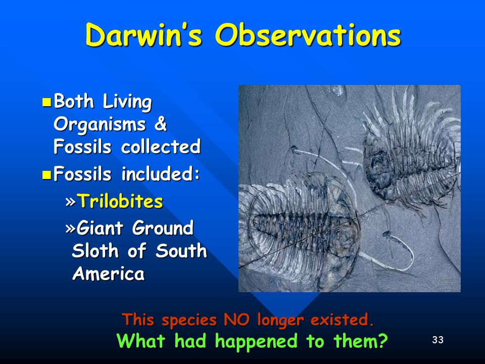 33 Darwin's Observations Both Living Organisms & Fossils collected Both Living Organisms & Fossils collected Fossils included: Fossils included: »Tril