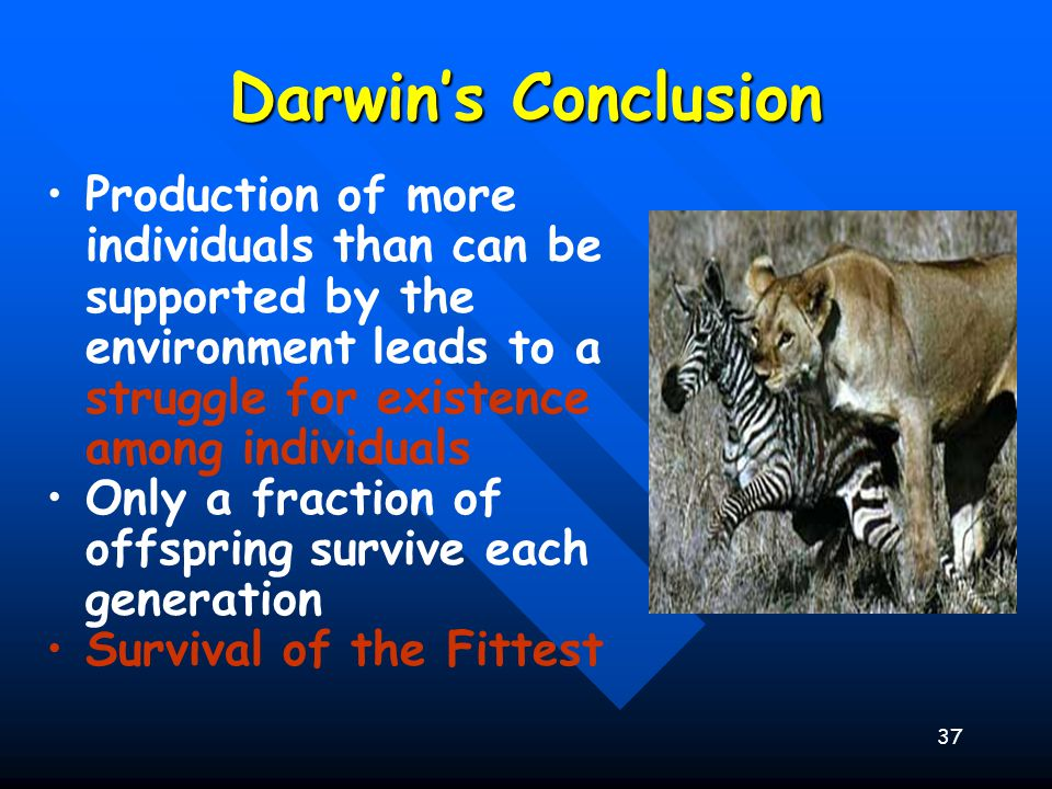 37 Darwin's Conclusion Production of more individuals than can be supported by the environment leads to a struggle for existence among individuals Onl