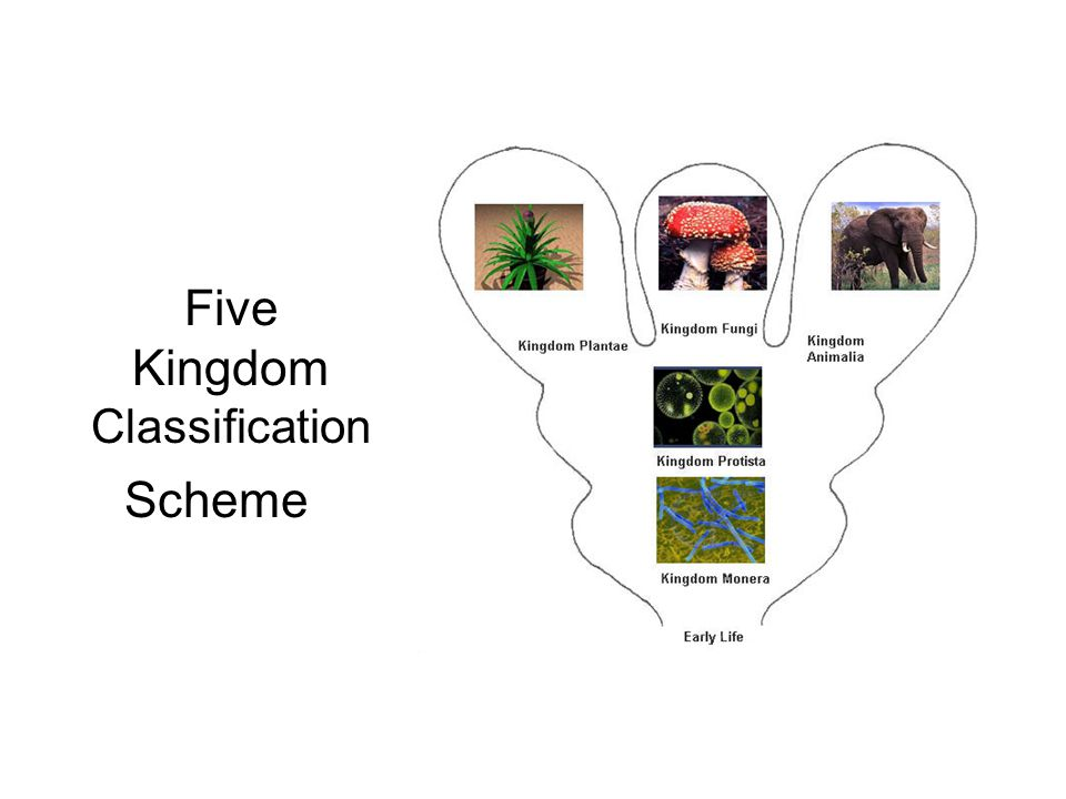 Five Kingdom Classification Scheme