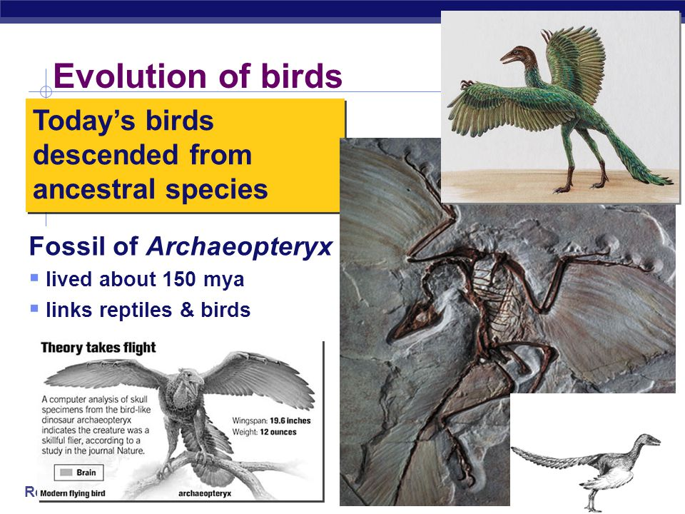 Regents Biology Fossils tell a story… the Earth is old Life is old Life on Earth has changed