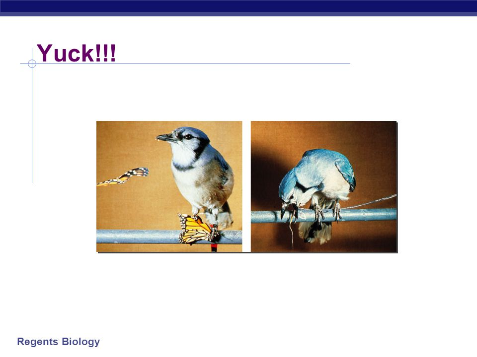 Regents Biology Too close to call for hungry birds!!