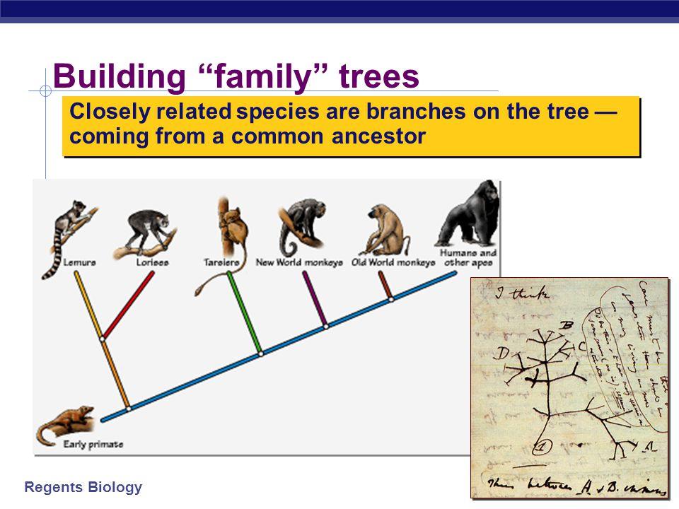 Regents Biology 3. Molecular record 1002030405060708090100110120 LampreyFrogBird Dog MacaqueHuman 32845 67 125  Comparing DNA & protein structure  e
