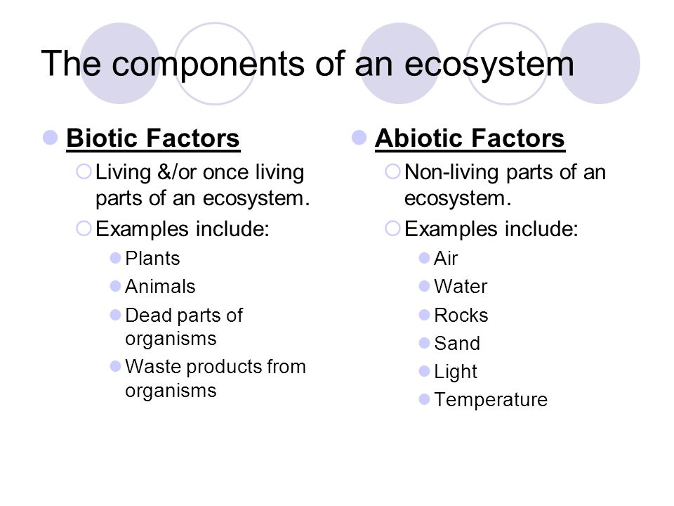 The components of an ecosystem Biotic Factors  Living &/or once living parts of an ecosystem.  Examples include: Plants Animals Dead parts of organi
