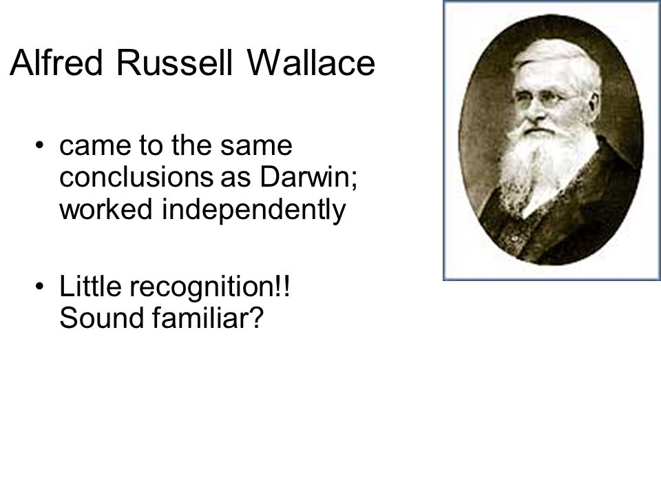 Alfred Russell Wallace came to the same conclusions as Darwin; worked independently Little recognition!! Sound familiar?