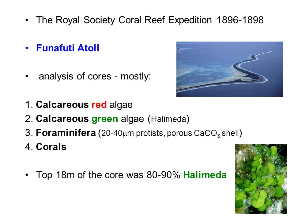 The Royal Society Coral Reef Expedition 1896-1898 Funafuti Atoll analysis of cores - mostly: 1. Calcareous red algae 2. Calcareous green algae ( Halim