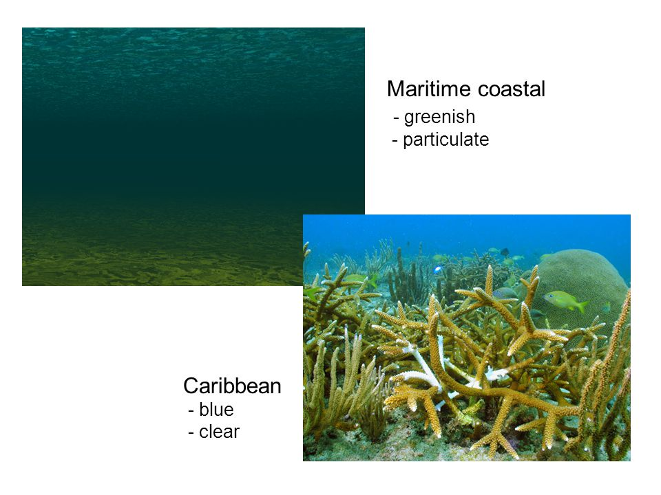 Maritime coastal - greenish - particulate Caribbean - blue - clear