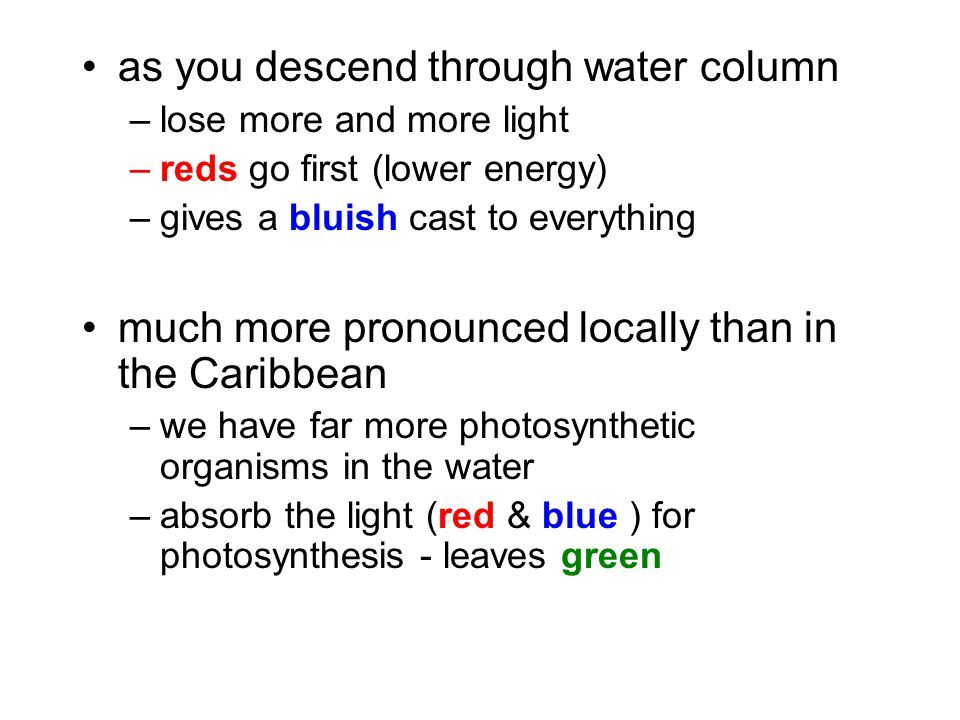 as you descend through water column –lose more and more light –reds go first (lower energy) –gives a bluish cast to everything much more pronounced lo
