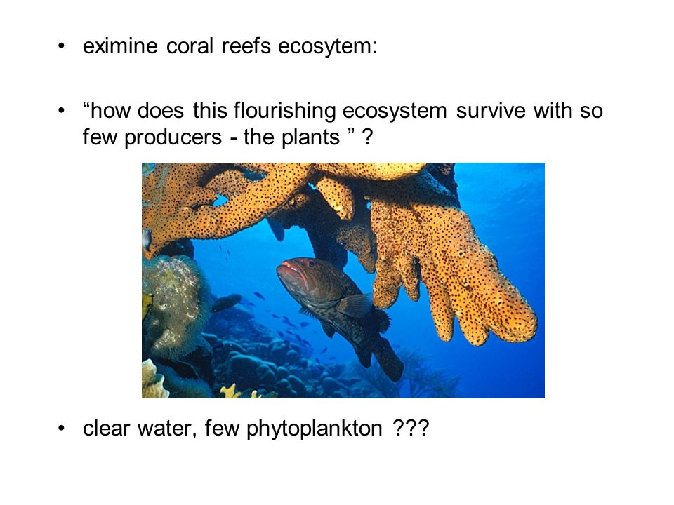 """eximine coral reefs ecosytem: """"how does this flourishing ecosystem survive with so few producers - the plants """" ? clear water, few phytoplankton ???"""