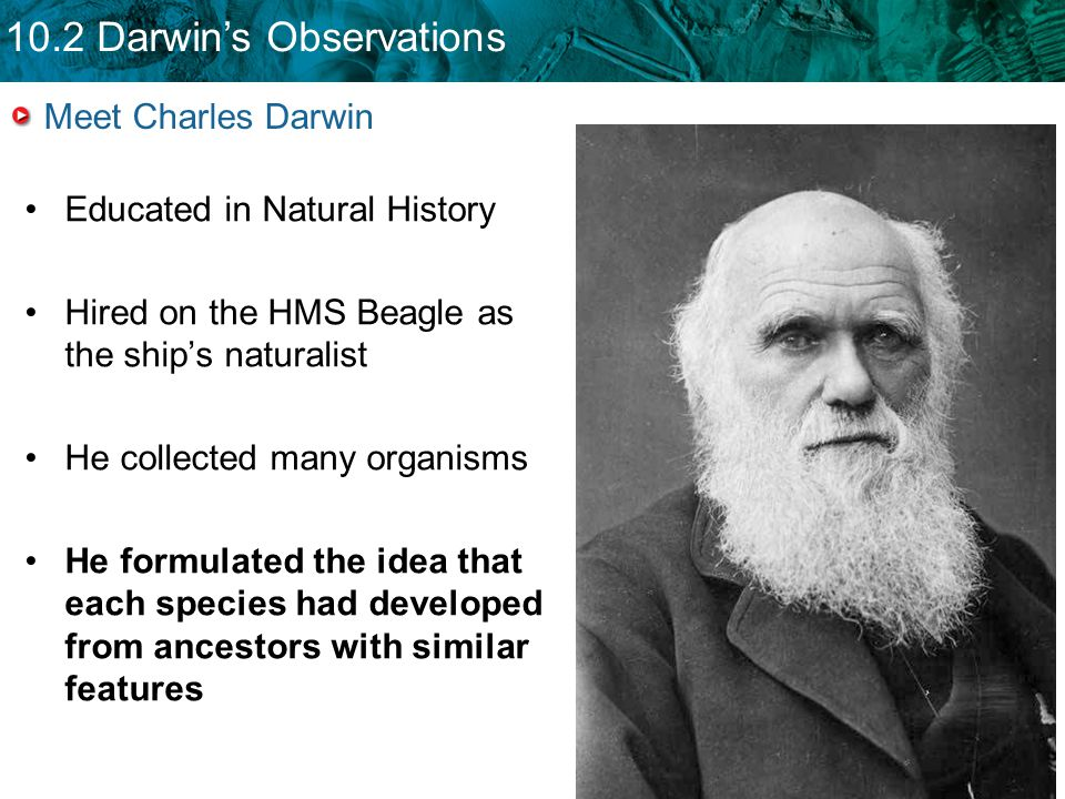 10.2 Darwin's Observations Meet Charles Darwin Educated in Natural History Hired on the HMS Beagle as the ship's naturalist He collected many organisms He formulated the idea that each species had developed from ancestors with similar features