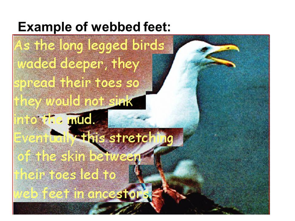 Example of webbed feet: