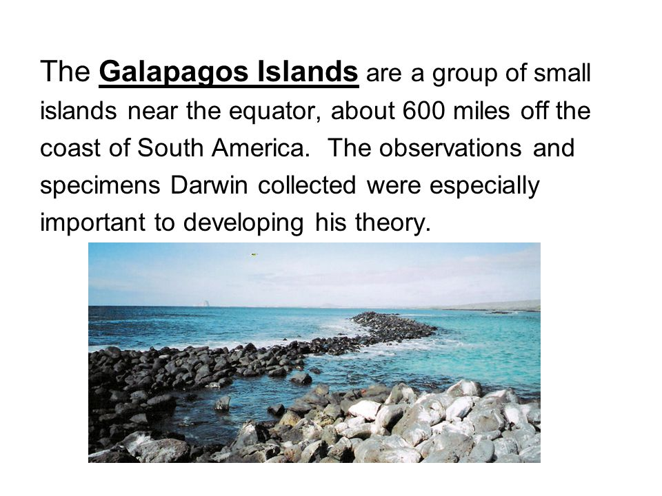 The Galapagos Islands are a group of small islands near the equator, about 600 miles off the coast of South America. The observations and specimens Da