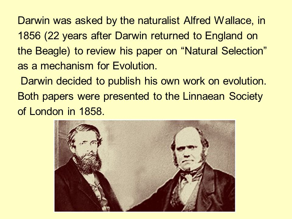 "Darwin was asked by the naturalist Alfred Wallace, in 1856 (22 years after Darwin returned to England on the Beagle) to review his paper on ""Natural S"