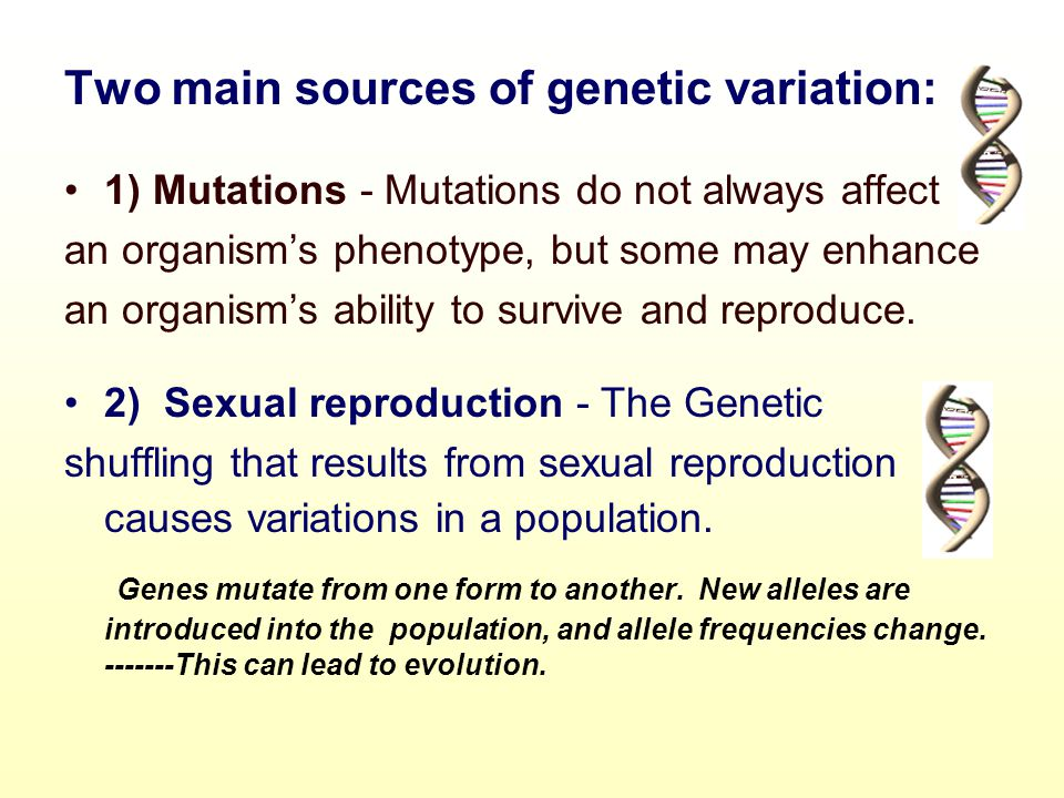 Two main sources of genetic variation: 1) Mutations - Mutations do not always affect an organism's phenotype, but some may enhance an organism's abili