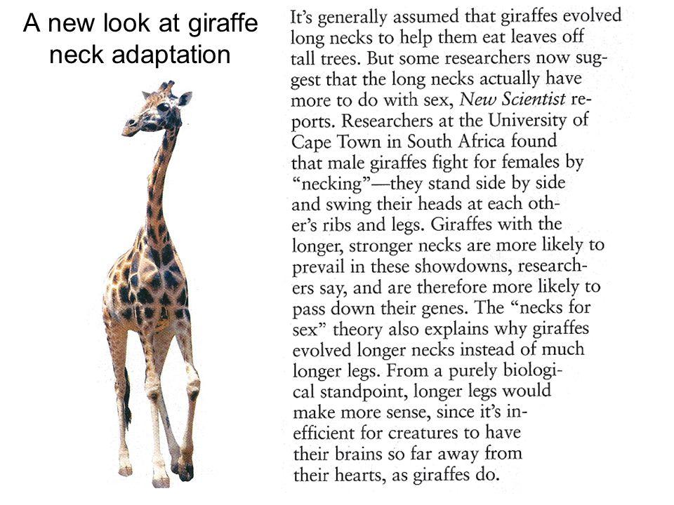 A new look at giraffe neck adaptation