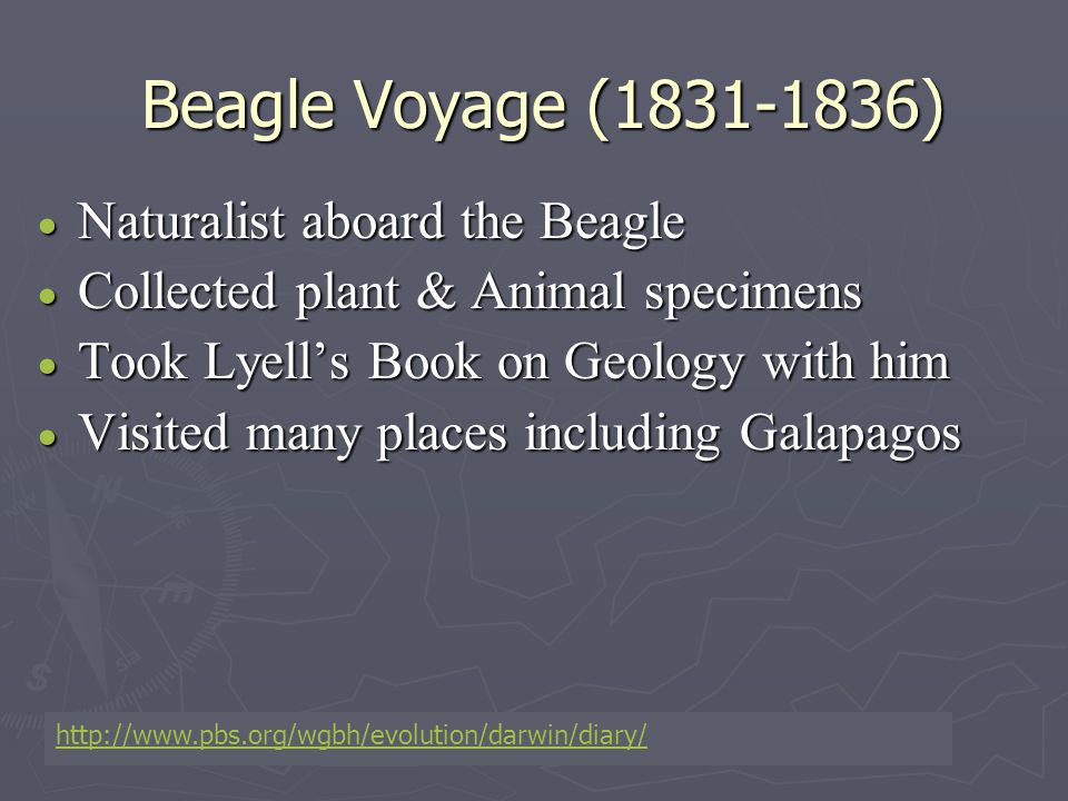 Beagle Voyage (1831-1836)  Naturalist aboard the Beagle  Collected plant & Animal specimens  Took Lyell's Book on Geology with him  Visited many p
